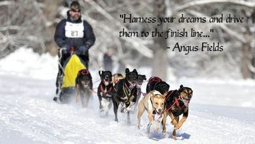 New England Dog Sled Races - Cloud9 Outdoor Adventures - Boston ...