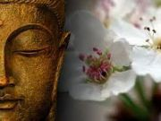 buddhist single men in sutton county The online home for the triratna buddhist community.
