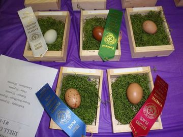 Bluebonnet Egg Show