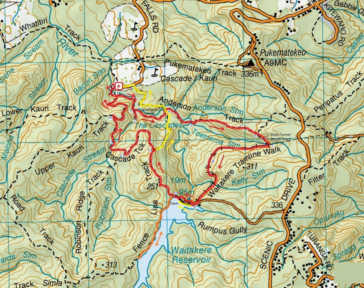 Cascade Kauri & Waitakere Dam Loop