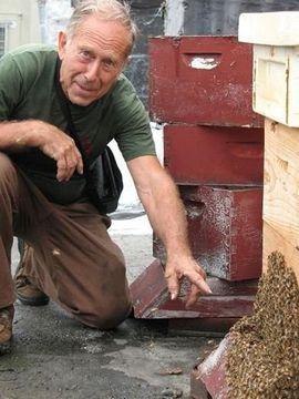 Brooklyn beekeeper at work