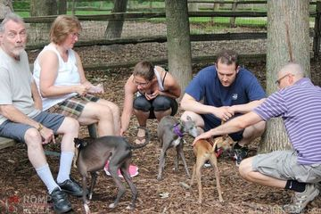 Chicago italian greyhound meetup