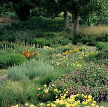 Landscaping with Drought Tolerant and Native Plants