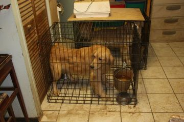 Dog Training Northville Mi