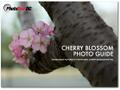 Cherry Blossom Photo Guide
